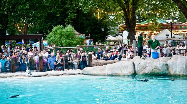 Penguin Beach Live! at Zoo Lates