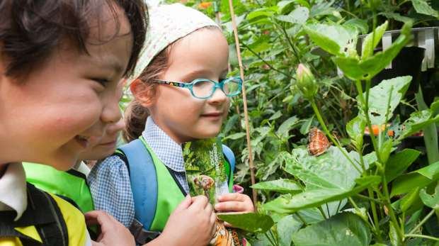 Child enjoying education session in the butterfly house.