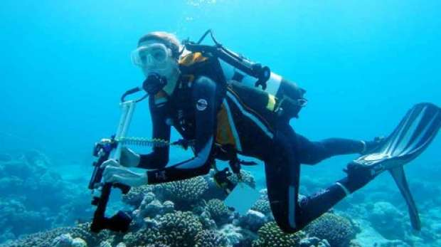 Researcher; Dive; Coral; Chagos