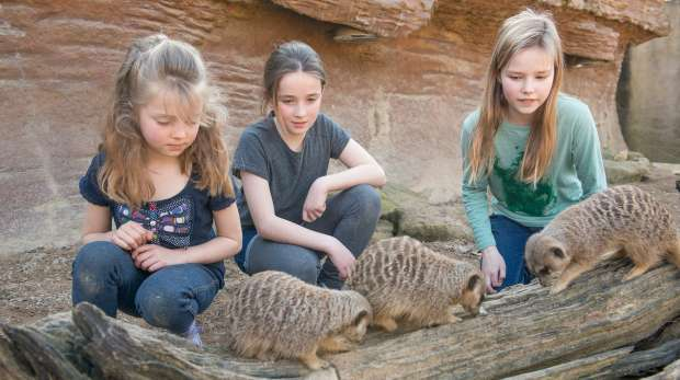 Meet the meerkats, children in with the meerkats