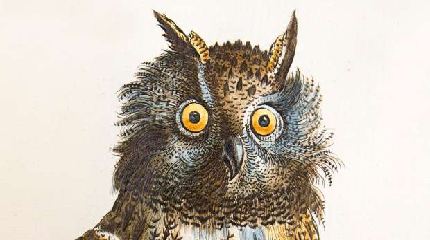 Bubo maximus engraving in Vol. 1 of Manetti, 1767-76