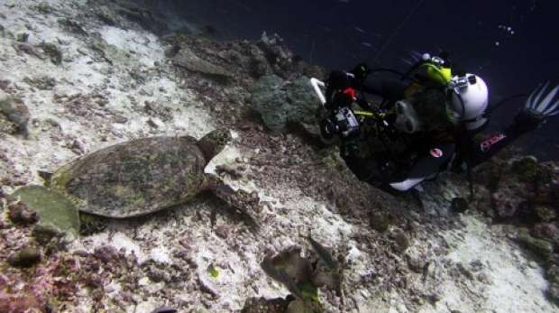 Elizabeth Widman and turtle in Chagos