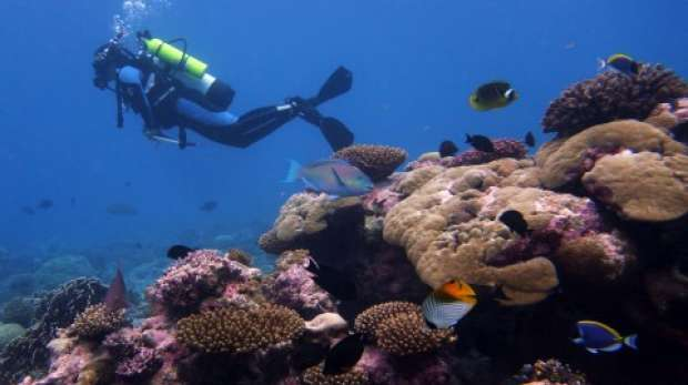 Grouper survey in Chagos