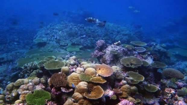 coral garden; Chagos; pristine; reference site; climate change