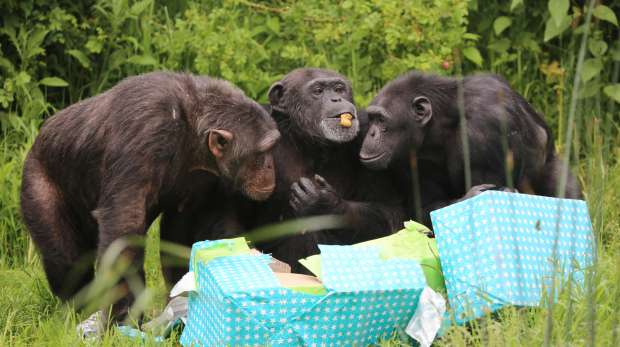 Koko, Phil and Elvis investigate their presents