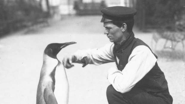 King Penguin, with keeper Harry Munro (1914). Munro was sadly lost in action during the First World War, having served in the army, in airships and on anti-submarine patrol.