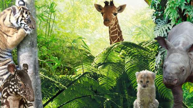 Kids - featuring baby animals from London and Whipsnade Zoo.