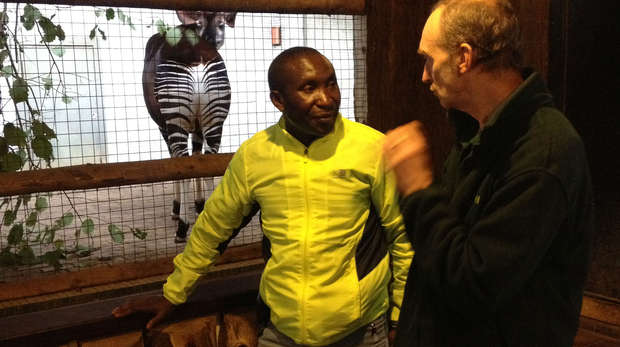 Virunga National Park Ranger Andre Bauma, meets a keeper at the okapi enclosure at ZSL London Zoo.