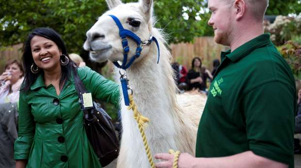 Animal Encounter with Perry the llama
