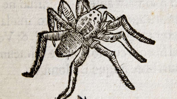 Spider woodcut  from Aldrovandi circa 1638