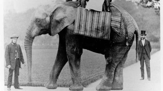 Jumbo the first African elephant at ZSL London Zoo, with Matthew Scott circa 1870. Photographed by Frederick York
