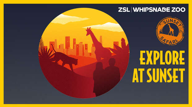 Sunset Safari at ZSL Whipsnade Zoo
