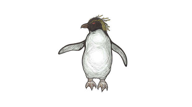 Ricky the Rockhopper by Alison Limentani