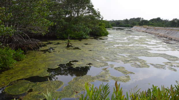 Pollution seawalls  mangroves