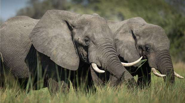 Elephants (c) James Suter Black Bean Productions