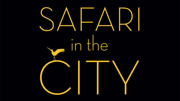 Safari In The City
