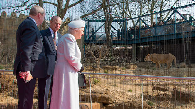 HM The Queen and HRH The Duke observing Asiatic lion