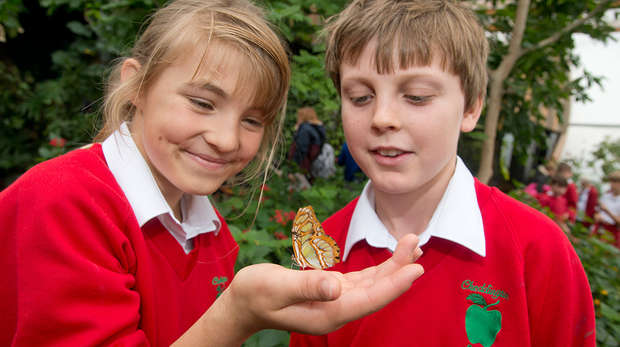 KS1 Lifecycles Butterfly House