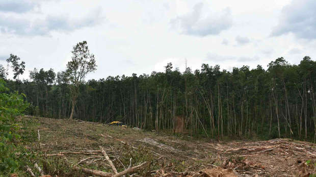 Forestry Consession Site at Dangku