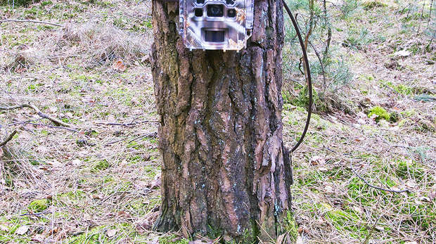 Camera trap set-up
