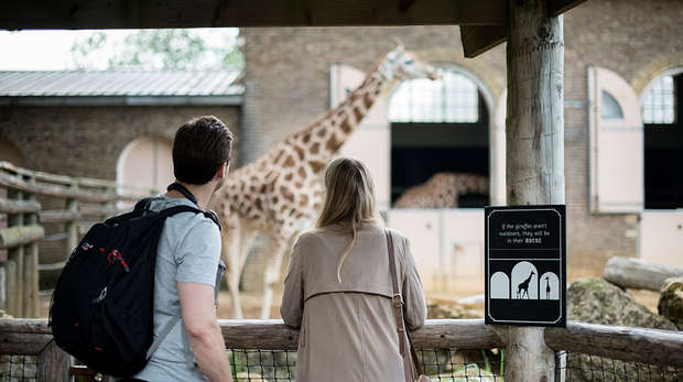 Zoo Nights visitors enjoy view of our giraffes