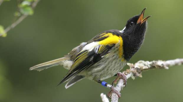 HiHi_singing male_credit Eric Wilson