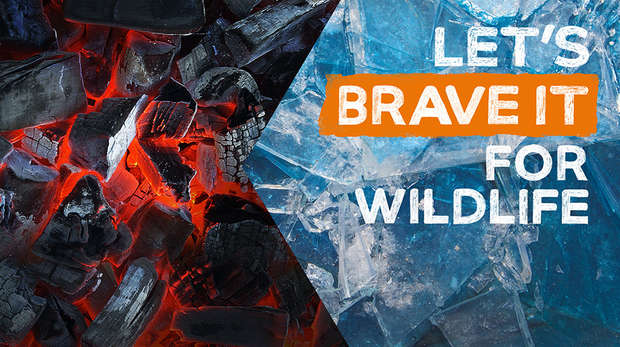 Walk of Fire and Ice at ZSL London Zoo