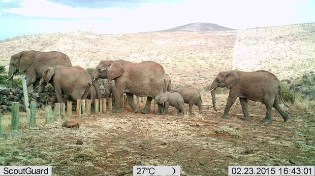 Elephant Group Camera Trap Image