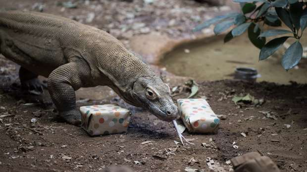 Ganas opens his birthday presents