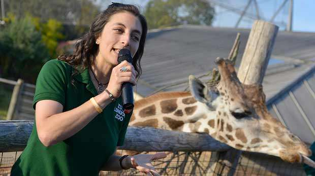 ZSL London Zoo presenter with microphone and giraffe