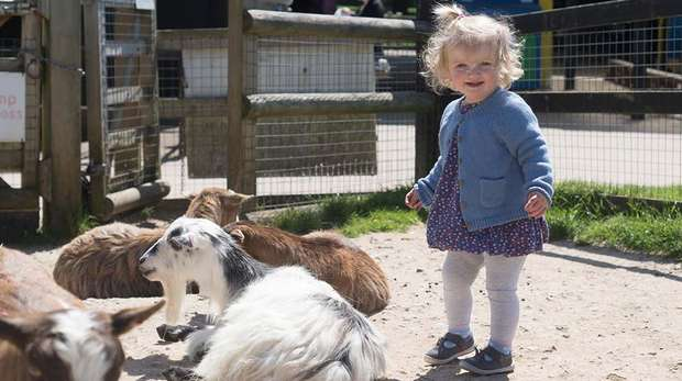 toddller with goats at the Zoo