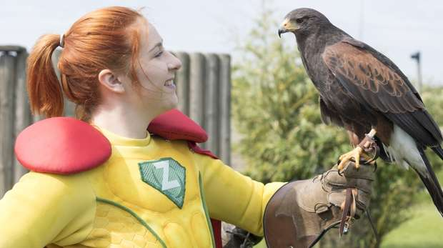 Captain Z and Sierra, a 23 year old Harris's hawk, at ZSL Whipsnade Zoo