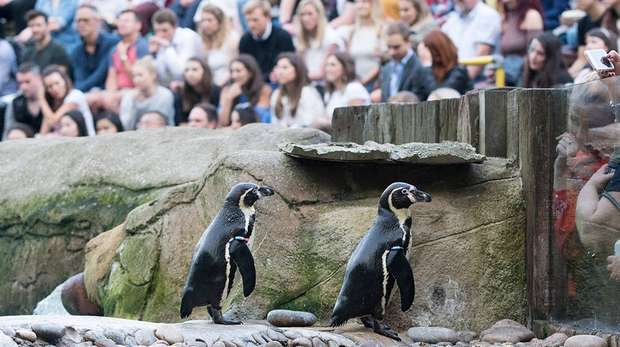 Daily talks at ZSL London Zoo