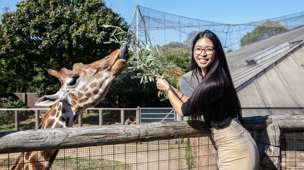 Meet the Giraffes at ZSL London Zoo
