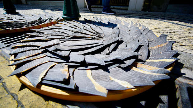 A spiral of shark fins drying in the sun