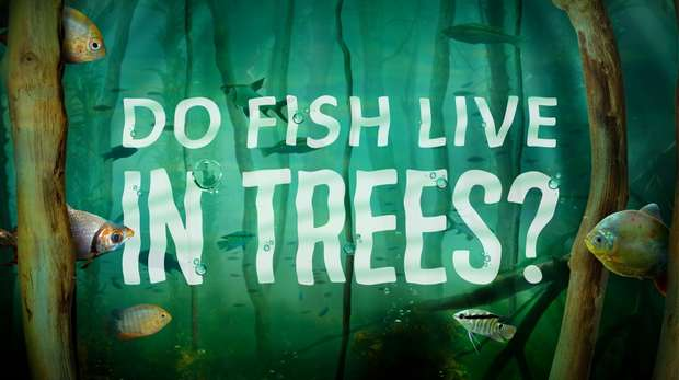 Do Fish Live in Trees