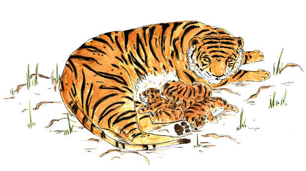 Tiger and her cubs