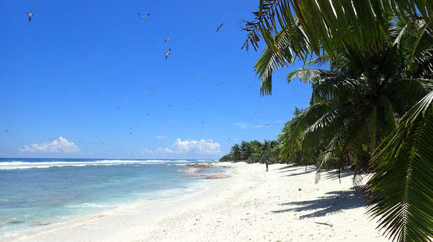 Photo looking up the beach, with lush vegetation on one side, the ocean on the other and many birds in the air