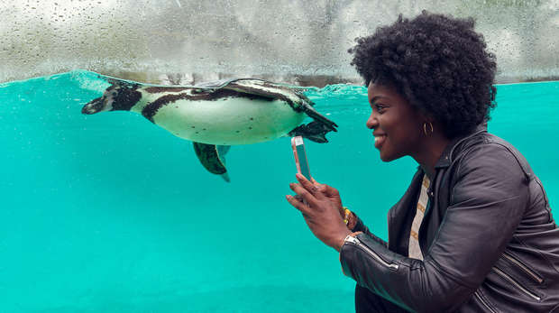A lady taking a selfie at Penguin Beach