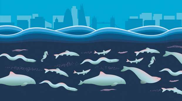 Illustration - stylised London skyline above waves with various marine creatures below