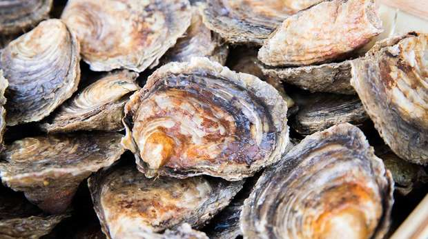 Close-up photo of a collection of oysters