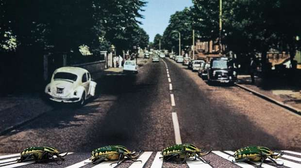 Beetles at ZSL London Zoo recreate iconic Abbey Road album cover on 50th anniversary