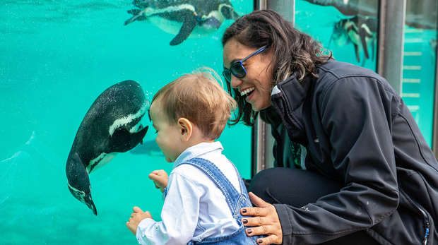 A mother and her son enjoy looking at the penguins at ZSL London Zoo