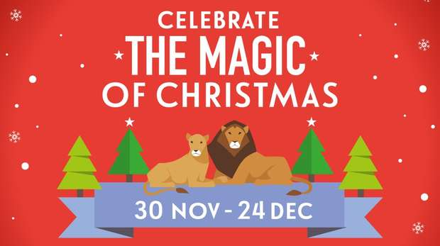 Celebrate the magic of Christmas at ZSL London Zoo