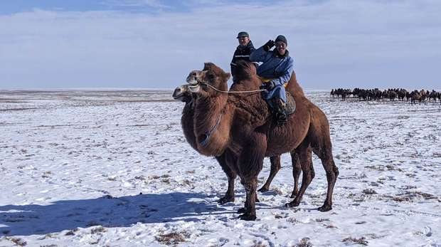 Photo - Two men, each riding a camel across the flat snow covered steppe in Mongolia