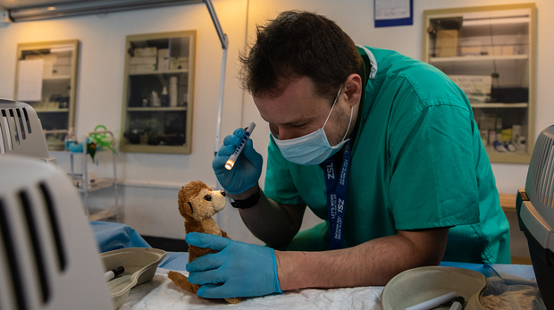A meerkat soft toy is treated by Vets as part of our Vets in Action activities