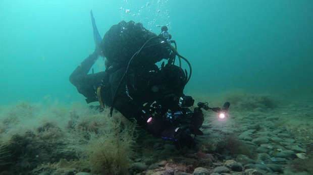Photo - A scuba diver underwater, taking a photograph of wildlife on the seabed