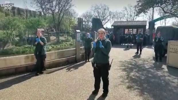Our keepers at ZSL London Zoo are standing in solidarity with the NHS