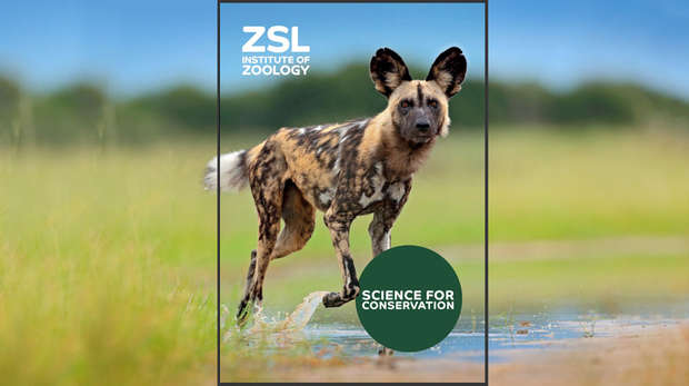 Image - Cover of the Science for Conservation publication, featuring an African hunting dog walking through a puddle