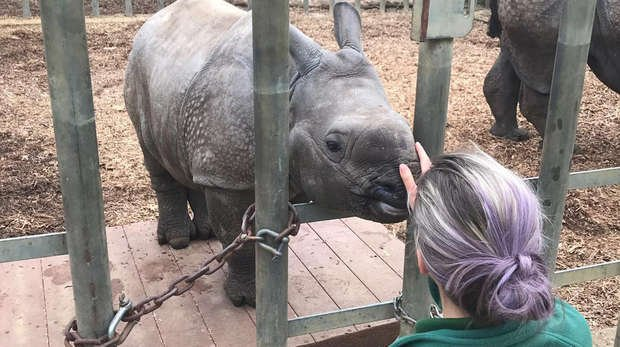 Baby rhino Zhiwa steps onto the scales as she nears five months old